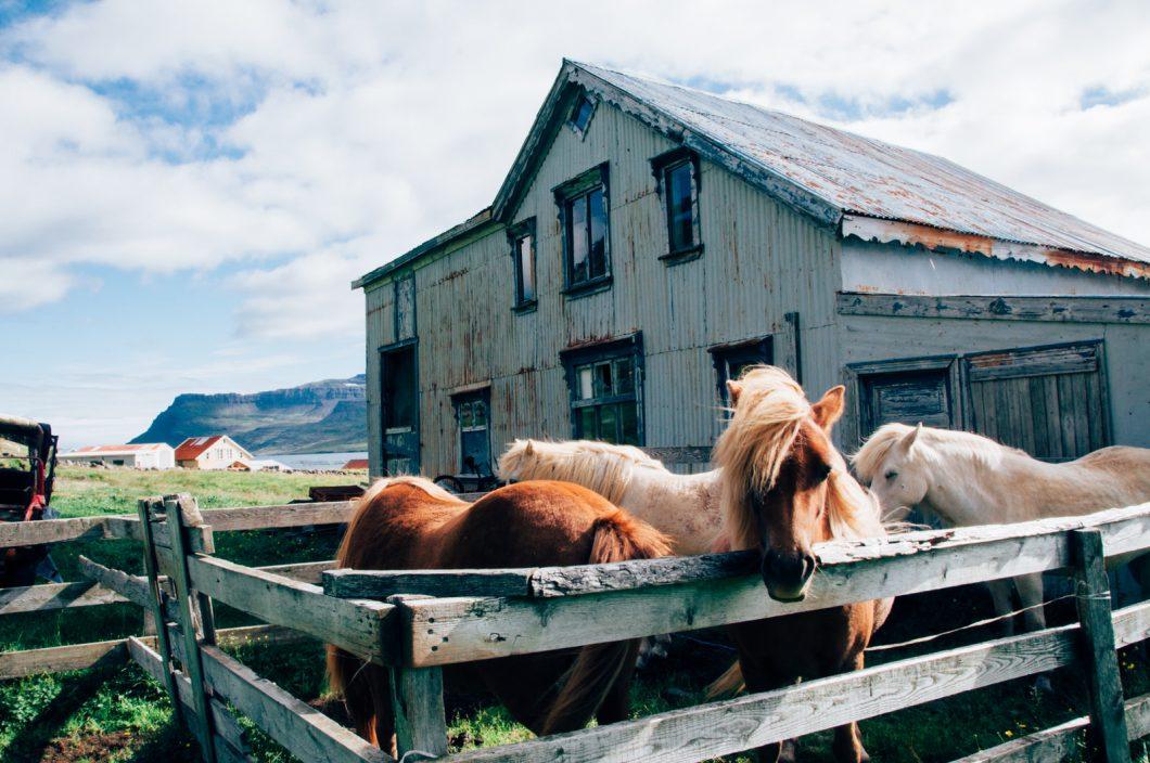 Direction les fjords de l'Est del'Islande