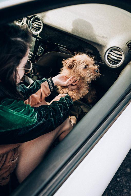 Notre guide pour voyager avec son chien — En voiture, train, avion, vélo…